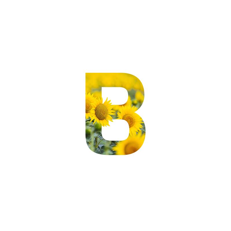 Bitar logo with sunflowers decor